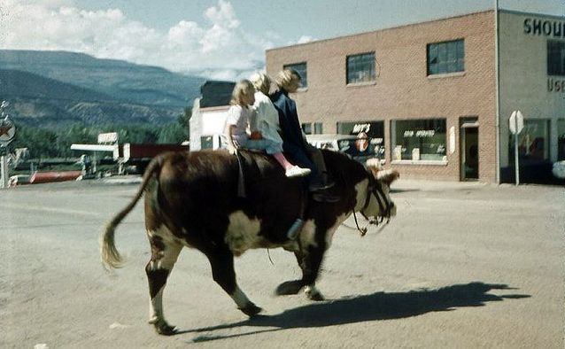 Cow in the Rifle, Colorado, 1969 Fair Days parade